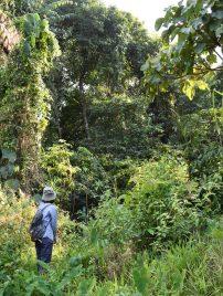 Forest near Myanmar border, northern Thailand