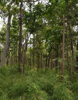 Dry Dipterocarp Forest